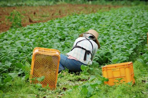 後継者不足から見る今の農業の問題点