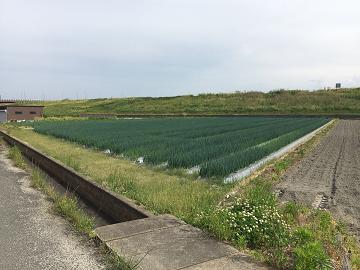 村瀬農産-1