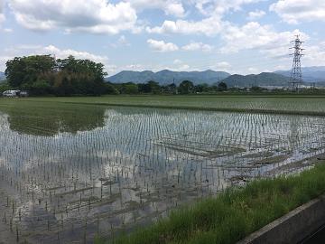 澤農園-1