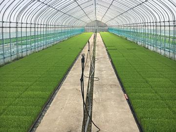 株式会社澤農園-2