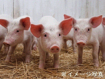 鹿児島県×養豚法人【32190】-top