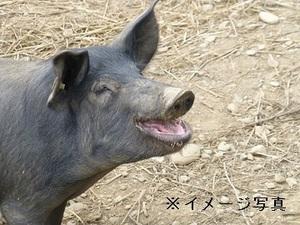 鹿児島県×養豚/法人【32191】-top