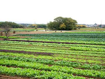三条市青年就農者育成等支援事業募集-1