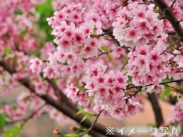 三条市×花・観葉/法人【32212】-2