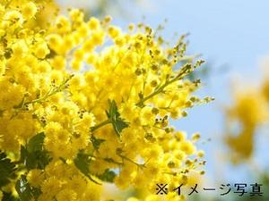 三条市×花・観葉/法人【32212】-top