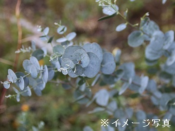 三条市×花・観葉/法人【32212】-1