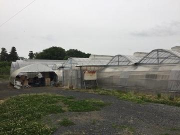 増山農園-8