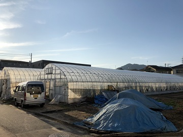 石橋農園(広島市)-8