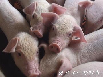 羽後町×養豚/法人【32285】-2