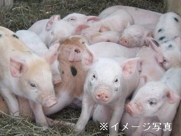 湯沢市×養豚/法人【32285】-top