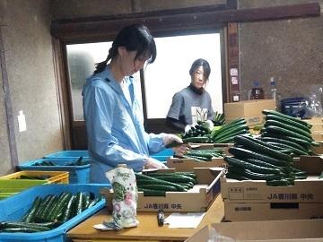 常谷種苗園芸株式会社-5