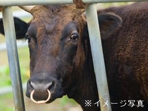 津山市×肉牛/法人【32316】-top