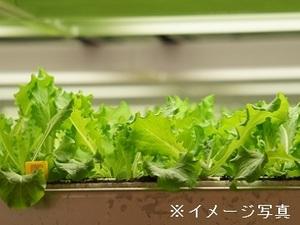 小浜市×野菜/法人【32327】-top