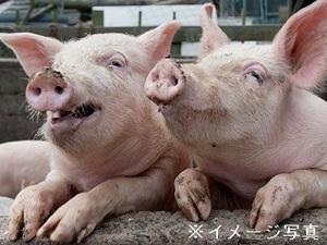 鹿沼市×養豚/法人【32330】-top