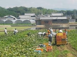 坂出市×露地野菜・稲作【32341】-top