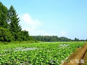 ユイ農園-top