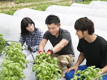 伊予市・大洲市×野菜/法人【0522】