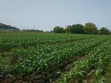 廣瀬農園-1