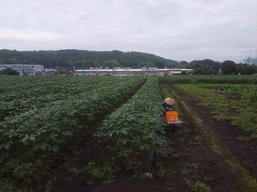 廣瀬農園-4