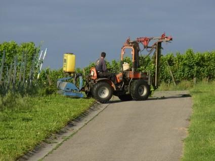 agriculture_wine_vineyard_224655