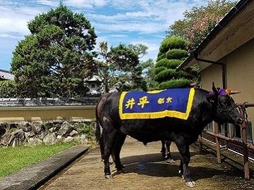 有限会社京都丹波牧場-4
