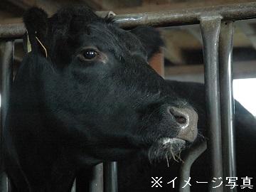 東浦町×肉牛-32453-top