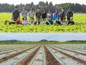 株式会社山英野菜-top