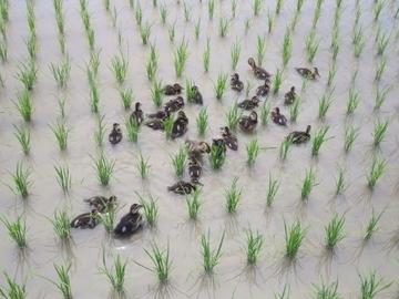 近藤菜園(新潟市)-4