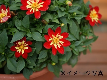 八女市×流通/法人【32514】-top