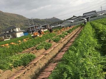 株式会社小原農園-4