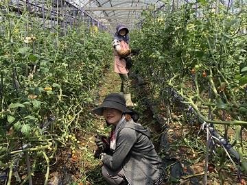 株式会社小原農園-5