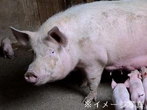 熊本市×養豚/法人【32516】-top