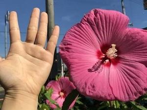 有限会社黒川種苗園-top