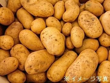 沖永良部島×野菜/法人【32536】-top