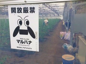 磯トマトファーム-5