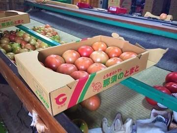 磯トマトファーム-6