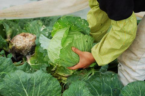 農業プラスアルファの経営のあり方
