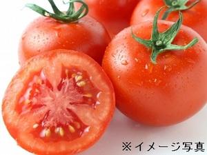 磯トマトファーム-top