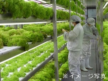 磐田市×植物工場/法人【32582】-top