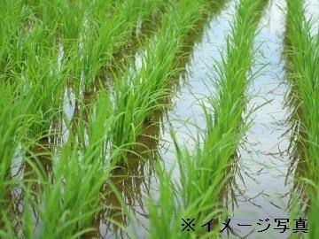 松阪市×稲作・畑作/個人【32589】-1