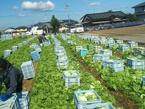 芟薮(カリヤブ)農園-top