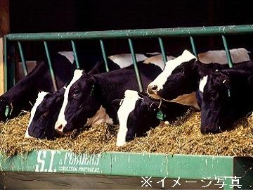 登米市×酪農/法人【32593】-2
