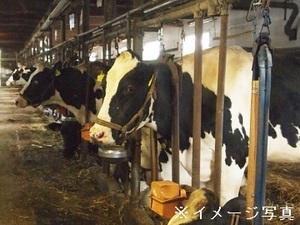 登米市×酪農/法人【32593】-top