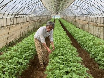株式会社ひさまつ農園-top