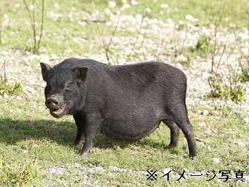 鹿屋市×養豚/法人【32613】-2