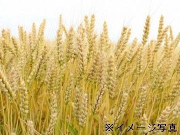 芽室町×農産営業/法人【32622】-2