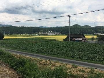 新田農園-8