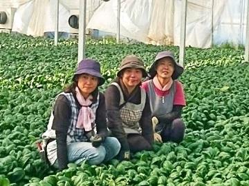 小林農園(本庄市)-top