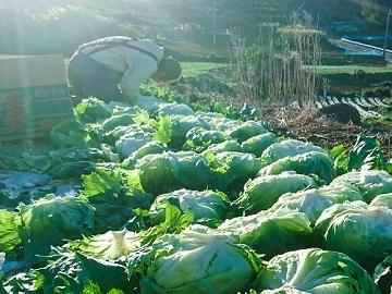 O-Style Farm-top