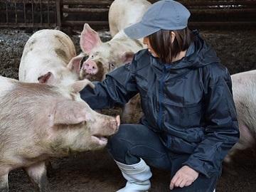 Kikuchi豚牧場-4